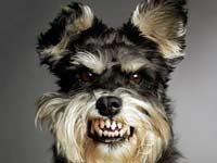 Метафизика сновидений «Собака»