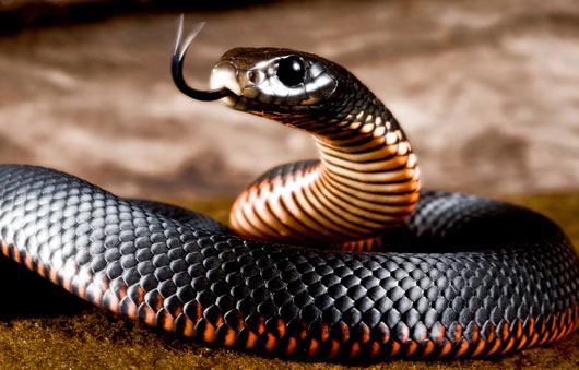 Змея – символ сновидения, приснилась змея